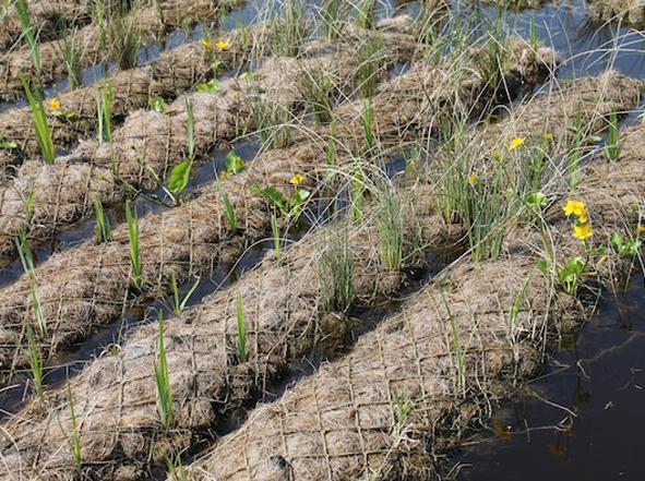rulli in cocco vegetati